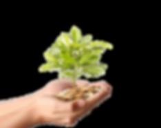 70944-plant-material-gold-money-photogra