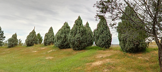 Homestead-Junipers.png
