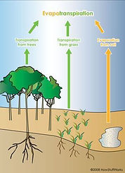 trees-affect-weather-2.jpg