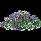 Floweringshrub3.png