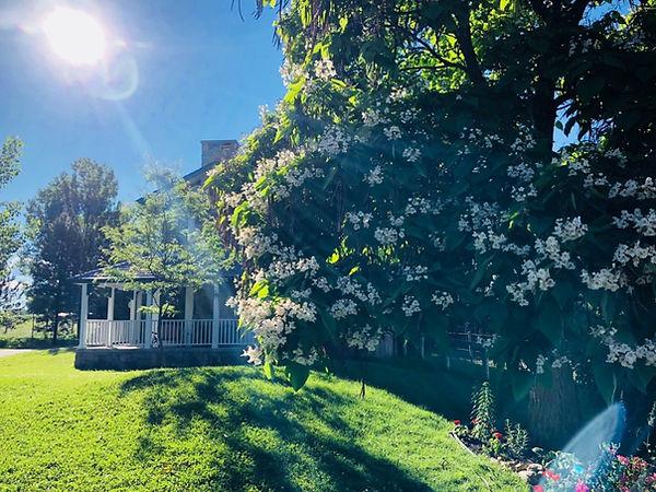 Botanical-house-1024x768-1.jpg