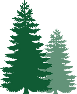 pine-trees-311512_1280.png