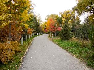 fall-path.jpg
