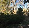 sprucegrove.jpeg
