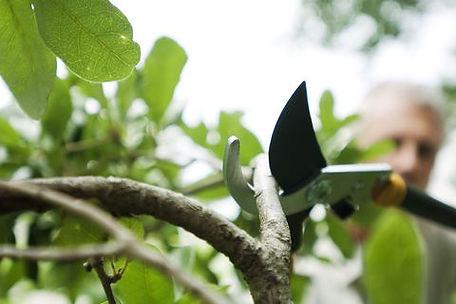 pruning3.jpg
