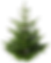 fir_tree_PNG2473.png