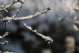 snow-644200_960_720.jpg