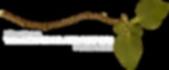 logo-final1-1.png