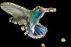 hummingbird_PNG90.png