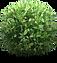 pin-by-kastriot-nebiu-on-tema-shrubs-pla