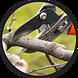 Tree-Pruning-Circle-5dc44feeca029.png