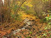 1280px-John_A._Finch_Arboretum_-_IMG_6909.JPG