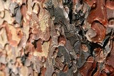 ponderosa-pine-bark-_flickr-user-tim-jon