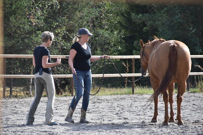 lempeä hevostaito
