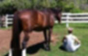 hevoset ja tunteet
