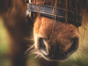 Rachaël Draaisma: Hevosten rauhoittavat signaalit - luento
