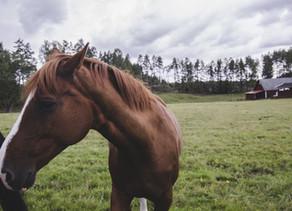 Tunnekieli on hevosten kieli