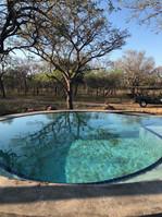 Bottero's pool.jpeg