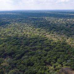 Sandfields tree cover.jpg