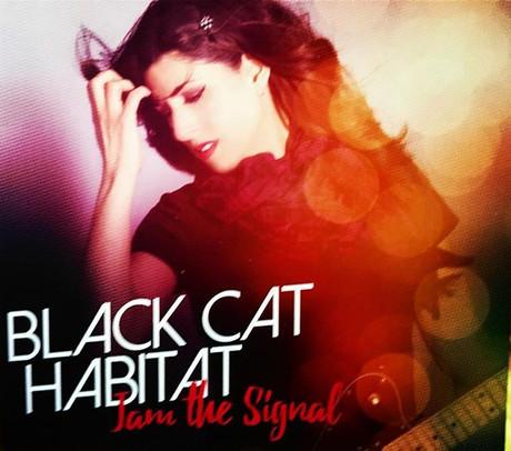Black Cat Habitat