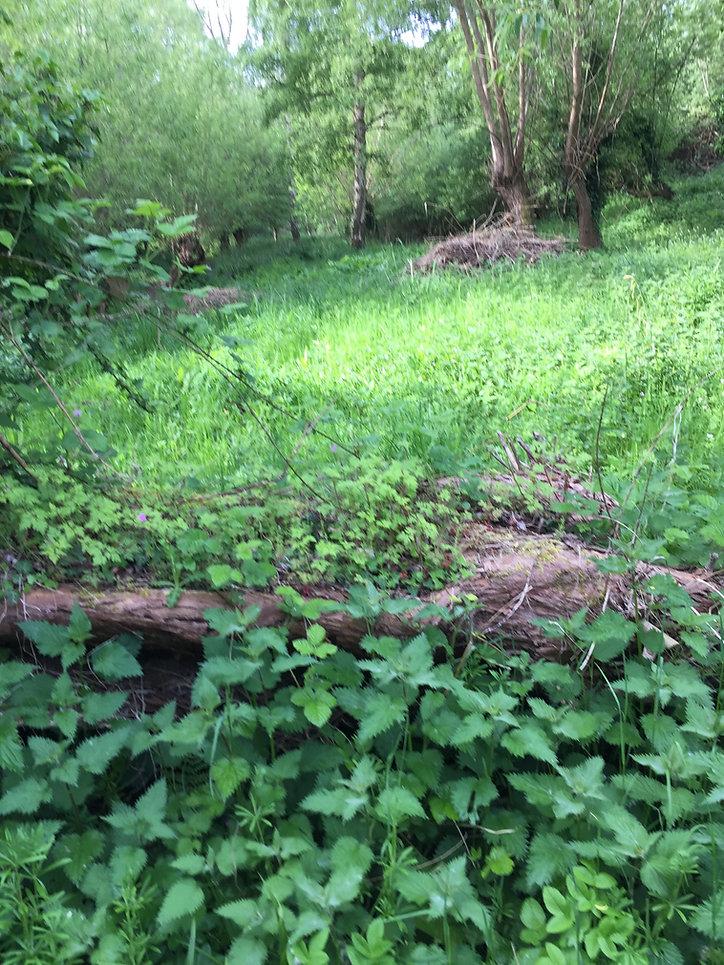 Lye Valley green 4.JPG
