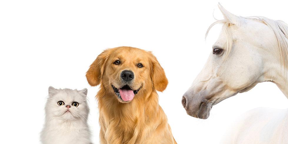 Private Labe Pet Treats