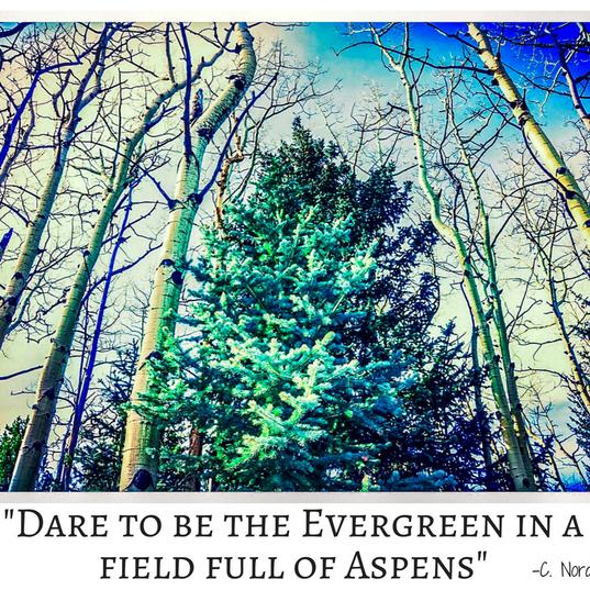 Evergreen Final.png