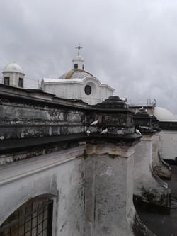 """COLÚMBIDAS BLANCAS"" - Guatemala"