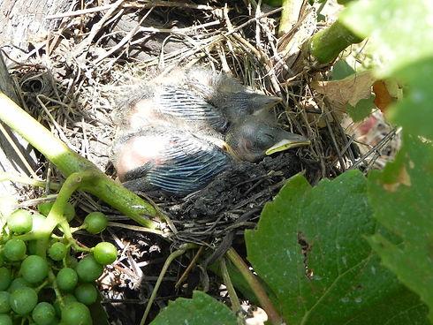 pajaro nido 1 - Copie.jpg