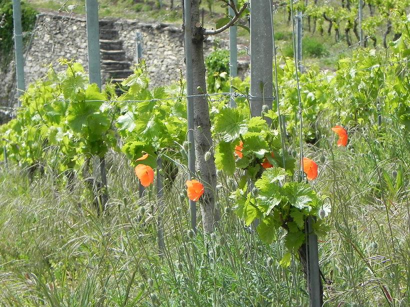 Gravelone flores 1 - Copie.jpg