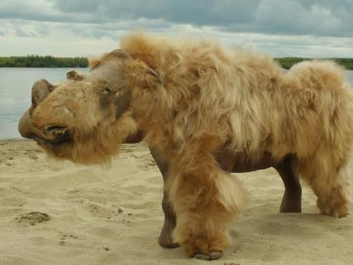 Woolly...Rhinos?