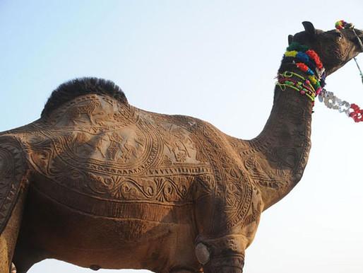 Camel Barber