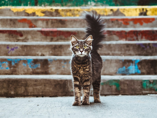 The Cats of Hermitage