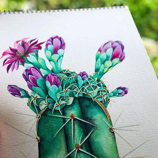 C A C T U S - watercolor on paper