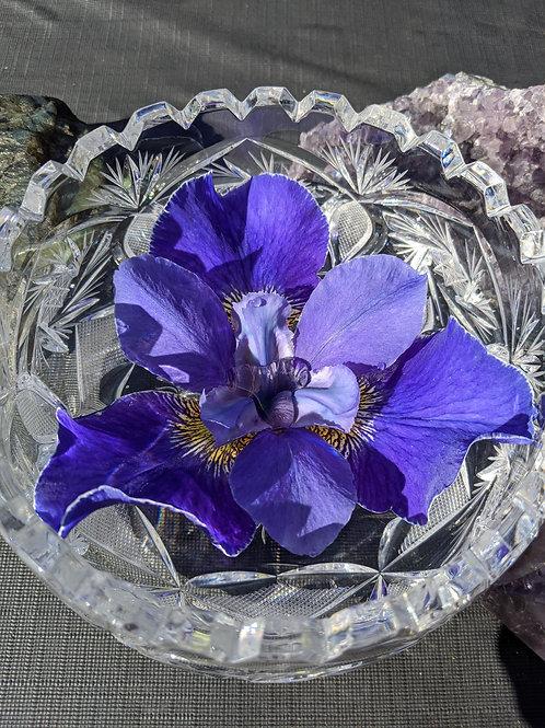 Scorpio Moon Iris Essence