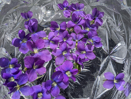 Making violet flower essence
