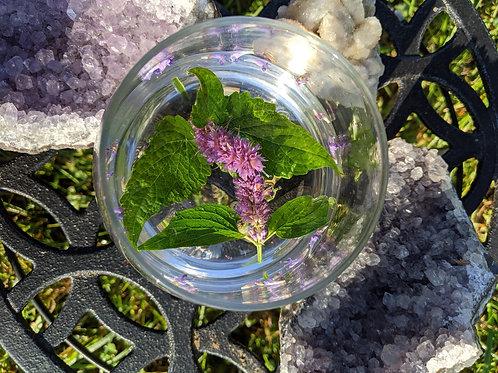 Anise Hyssop Flower Essence