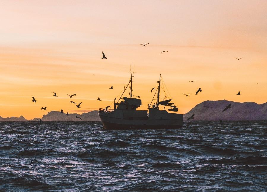 Cod Cluster Visjona torskenæring