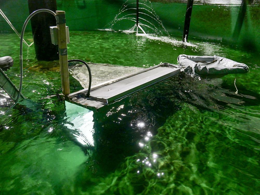 Foto av lysboks med kamera under vann