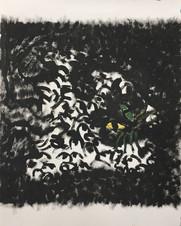 Black Cat Behemoth 1