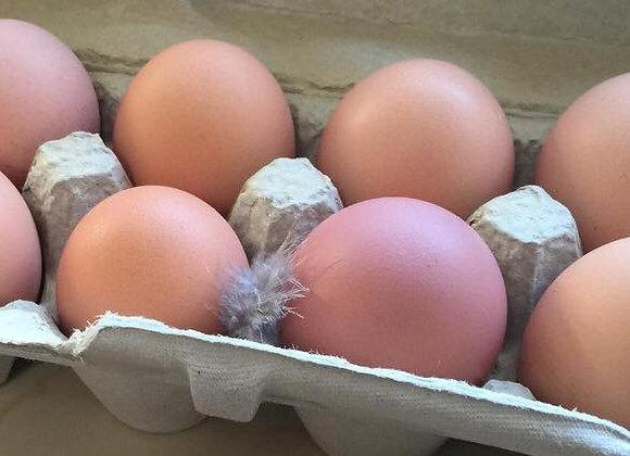 Croad Langshan Eggs (1 Dozen)