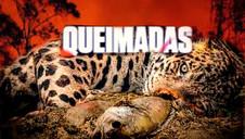 GOVERNO BOLSONARO PROMOVE O MAIOR DESMATAMENTO DA AMAZÔNIA DOS ÚLTIMOS DEZ ANOS