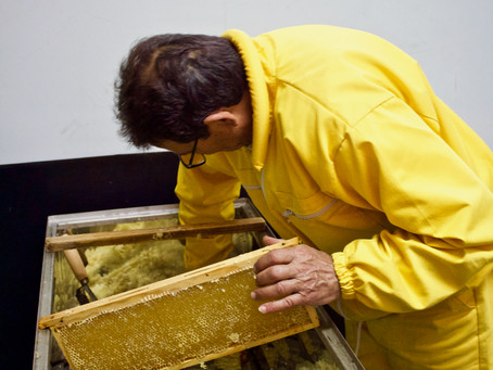 The Art of Beekeeping in Vazzano