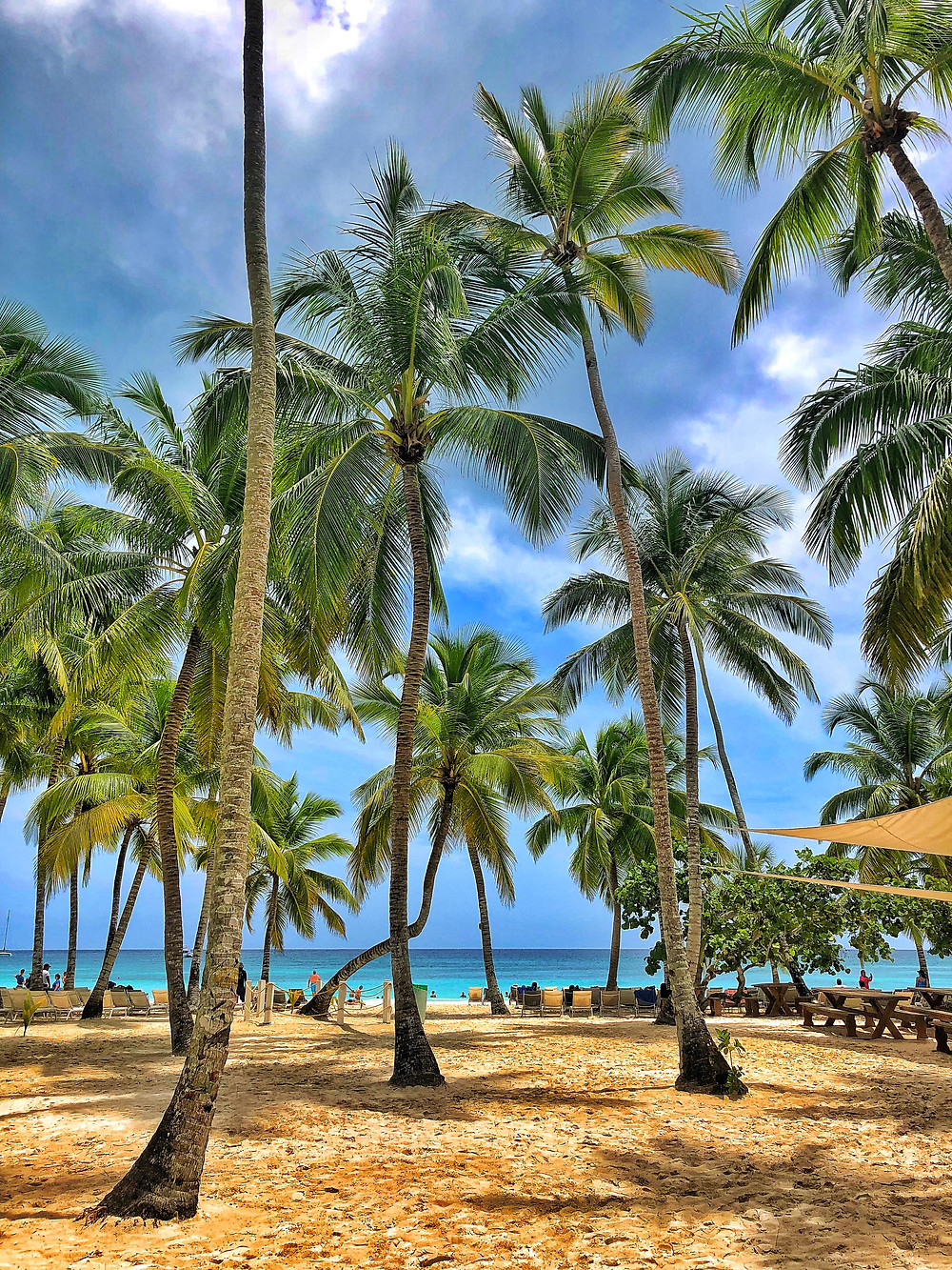 [Image description:] Palm trees fill the photograph, stretching upward against a background of rich blue skies. They have bright green palm leaves stretching from them. In the distance, you can see a deep blue ocean with lines of turquoise throughout. In the sand, you can see guests of the resort walking around and enjoying the beach.
