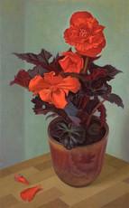 Scarlet Begonia
