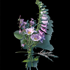 Votive Offering No.91 Dog Rose and Foxglove after Mary Delany  Kirsty Lorenz