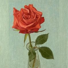 Rose  Alex Callaway