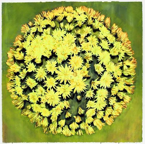 Flowering Sun in Knapweed II