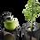 Thumbnail: Whole Slow Juicer Kuvings EVO820