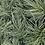 Thumbnail: Carex 'Evergold' Japanese Sedge